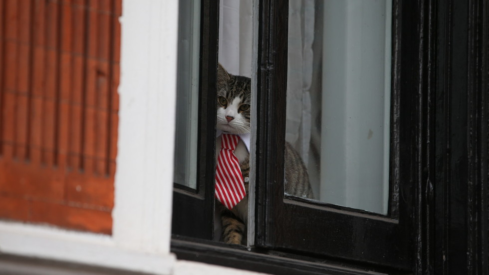 'Surreally idiotic': Ecuador's suggestion Assange used CAT FOR SPYING triggers WikiLeaks response