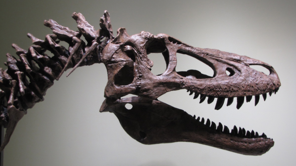 'Fossil hunter' flogs baby T. rex for $2.95mn on eBay, angering scientists (PHOTO)