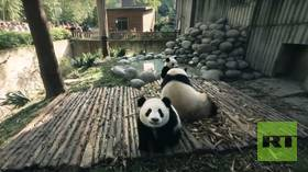 Panda With Me (360 Video)