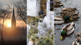 Hospitalized children & dead ducks? The 'official' Skripal narrative goes completely quackers