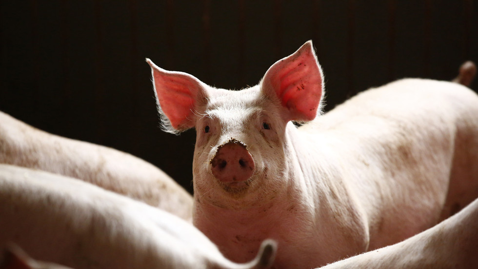 China's pig 'Ebola' outbreak 'will move markets, influence geopolitics' for years to come