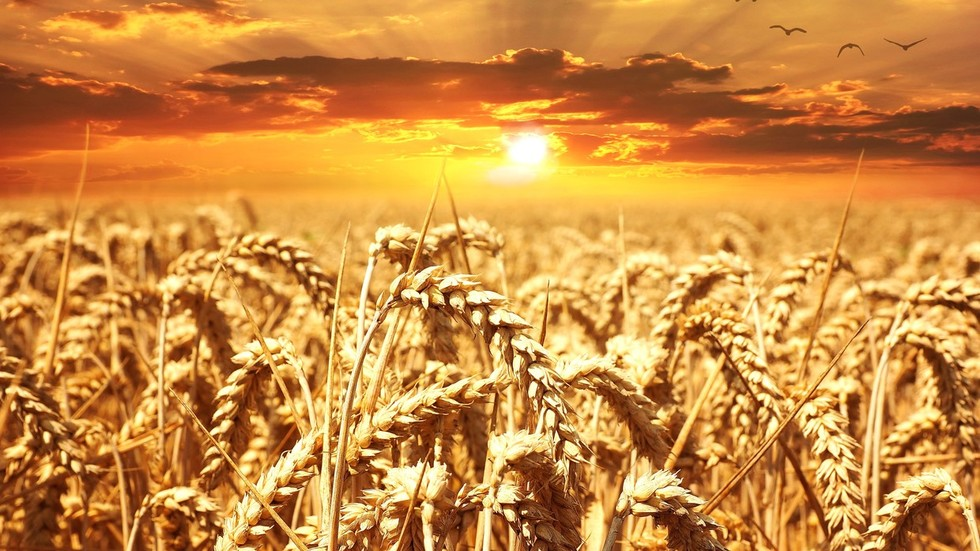 Russia to retain crown of world's top wheat exporter