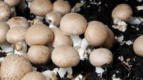 'Magic mushrooms' on par with LSD & heroin now legal in Denver
