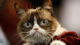 Internet hero Grumpy Cat dies aged 7