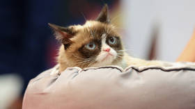Grumpy Cat, I hate everything you stood for, but…