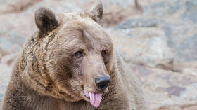 Russian man fights off Siberian bear by biting its tongue off