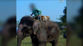 Elephants beaten and jabbed by handlers to 'play games' in horrifying footage