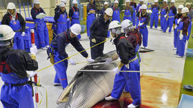 Japan to resume whale-hunting after 30-year ban, ignores global outcry