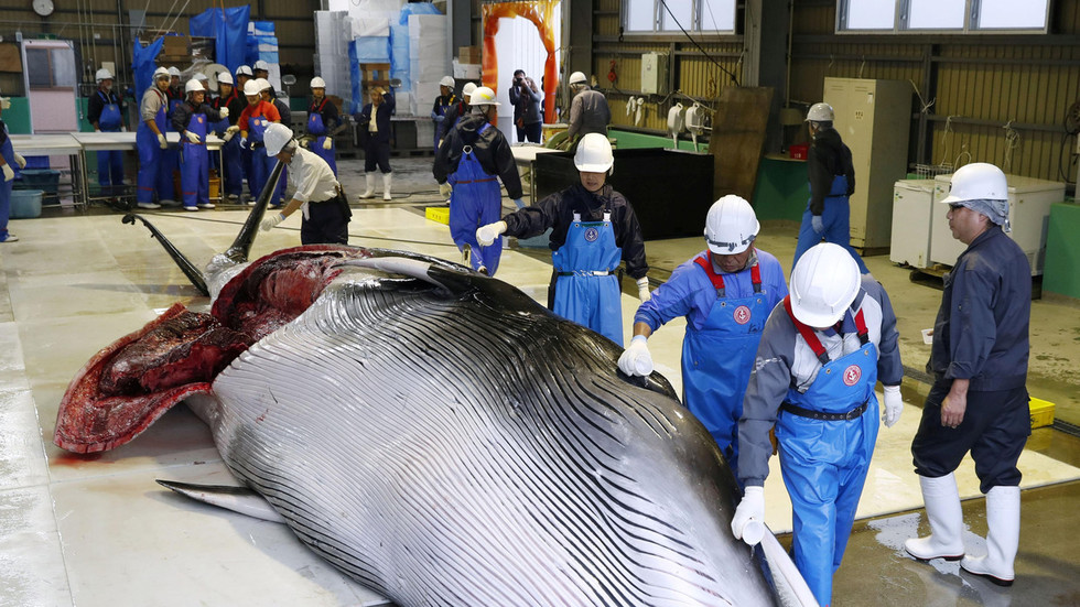 Japan's first commercial whale hunt in 30 years sparks outrage from activists