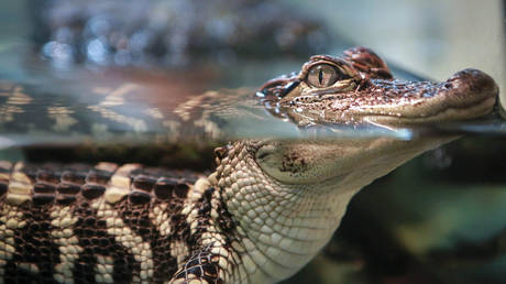 Flushing drugs could create 'meth gators', warn Tennessee police