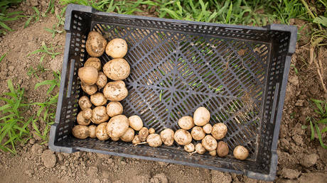 Potatoes in the wild never have these problems © Reuters / Lindsay Morris