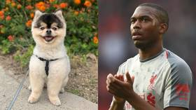 Lucci break: Daniel Sturridge's stolen dog returned after emotional social media plea