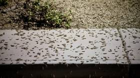 Insect invasion: Massive grasshopper swarms strike Las Vegas (PHOTO, VIDEOS)