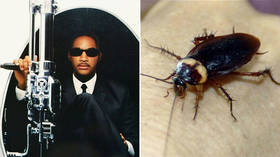 Call the 'Men in Black'! Huge cockroaches invade Russian resort of Sochi