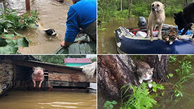 Clawing for life: Rescuers & volunteers save animals from flood in Russia's Far East (VIDEO, PHOTOS)