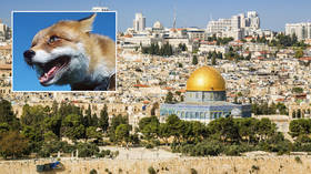 Sighting of foxes on Jerusalem's Temple Mount triggers prophecy theories about third Jewish temple