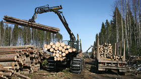 Lost forests: Russia considers banning lumber exports to China over concerns about illegal logging
