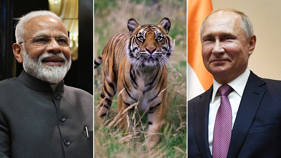 'We share love for tigers': Modi boasts of 'special chemistry' with Putin