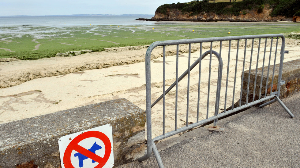 'Killer slime': Highly toxic algae invades France's picturesque beaches