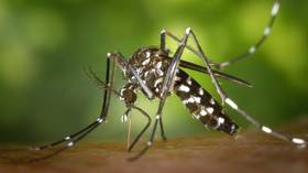 Genetically-modified mosquito apocalypse plan BACKFIRES spectacularly in Brazil