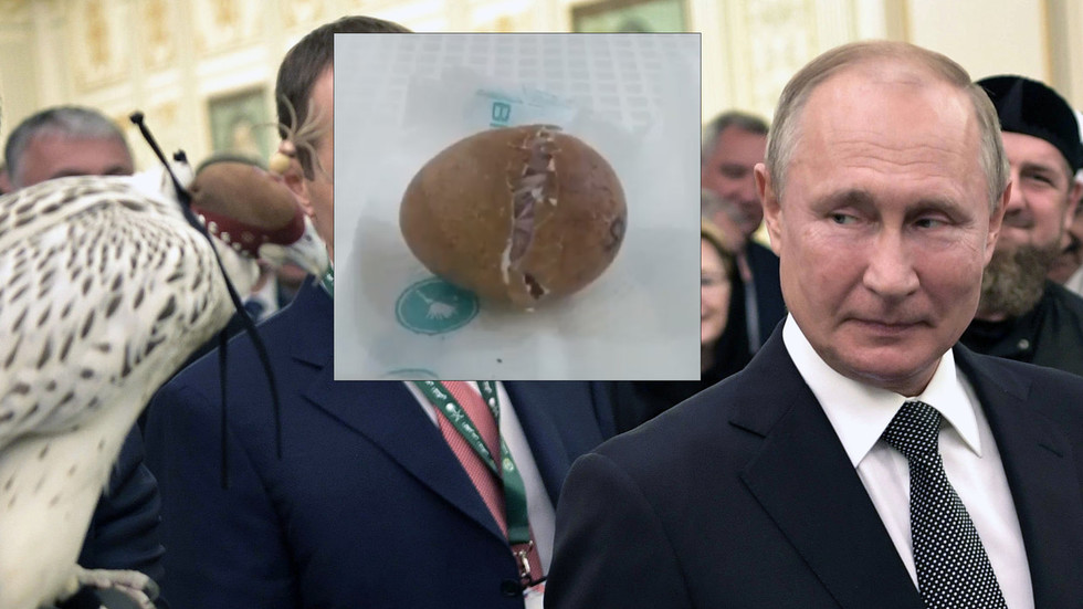 'Unique bird': Putin's gyrfalcon gift that 'misbehaved' at Saudi royal palace gets its ancestry & hatching VIDEO revealed