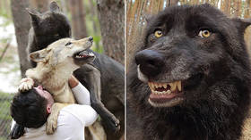 Dances with wolves, Russian style: Man keeps a whole WOLF PACK as pets (VIDEOS, PHOTOS)