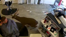 Deertrusion alert! Long Island salon freaked out by buck invader (VIDEO)