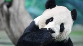 Russia plans to issue its first 'Panda' bonds next year – finance ministry