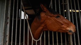 Australia opens probe into secret torture & slaughter of hundreds of racehorses for pet & HUMAN food