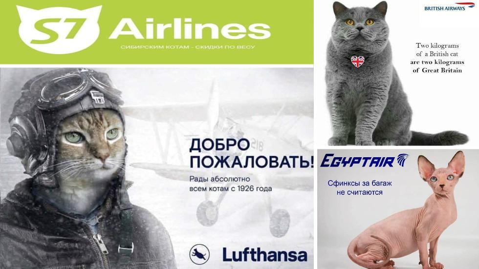 Aeroflot's infamous fat feline crackdown prompts 'outpurring' of aviation cat MEMES