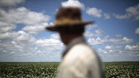 Farmer observes his soybean crops in Barreiras, Brazil
