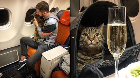 Viktor the cat and his owner Mikhail. © Facebook / Mikhail Galin