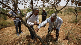 Israel cuts Palestinian farmers' access to their land behind separation wall with yearly quotas