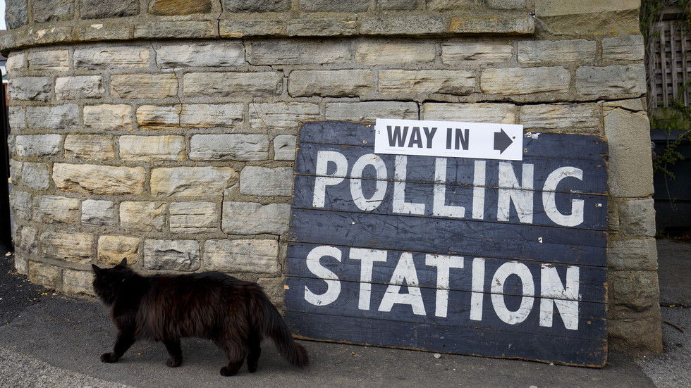 'Hey dogs, we want some of the action': Canines' feline rivals in UK strike back as #catsatpollingstations trends on election day