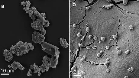 Scanning electron microscopy (SEM) images of meteorite fragments consumed by M. sedula. ©  Springer Nature / Scientific Reports / Tetyana Milojevic et al