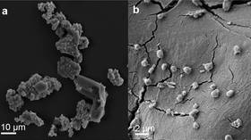 Heavy metal diet: Meteorite-consuming microbes could offer clues on how life formed on Earth