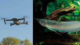 WATCH predatory tropical fish jump out of water to attack hovering DRONE