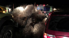 Tumblegeddon: Washington state highway buried under 30 feet of TUMBLEWEEDS, trapping drivers (PHOTOS, VIDEO)