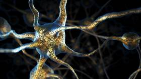 'Eureka moment': Scientists discover new neural activity suggesting our brains are even more powerful than we think