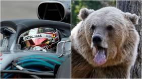 FURmula 1: Driver races bear on highway near Sochi (VIDEO)