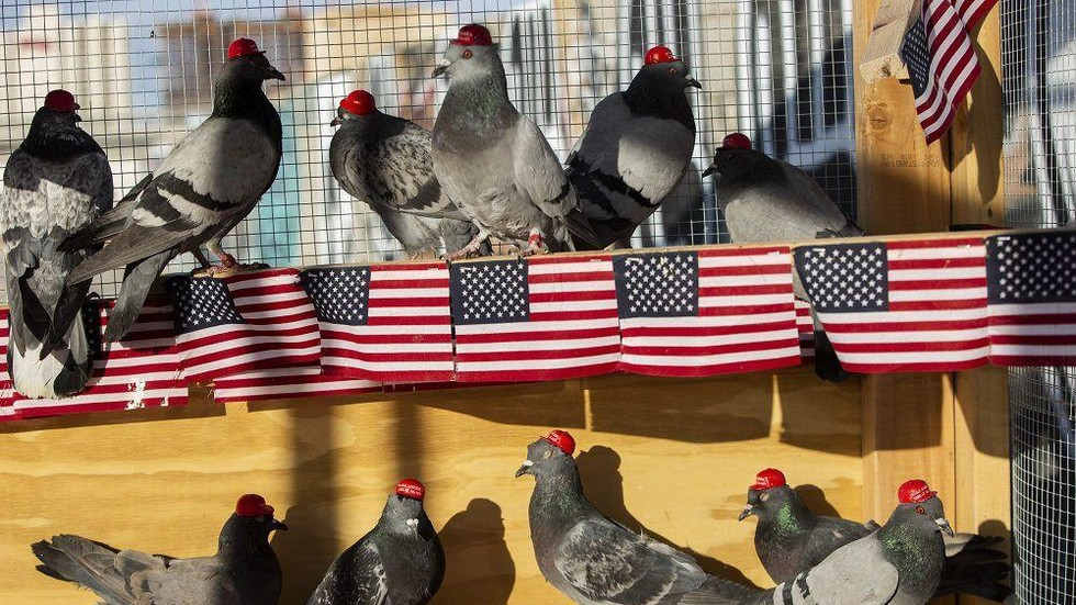Mysterious 'PUTIN' group unleashes flock of MAGA-hatted pigeons in Los Angeles to protest Dem debate