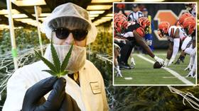 'Next year!' Pain of watching sport cannot be eased by marijuana, medical board rules – but NFL fan plans to petition again