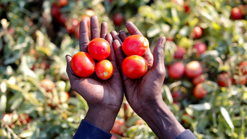 Covid-19 crisis could trigger global food shortage, UN warns