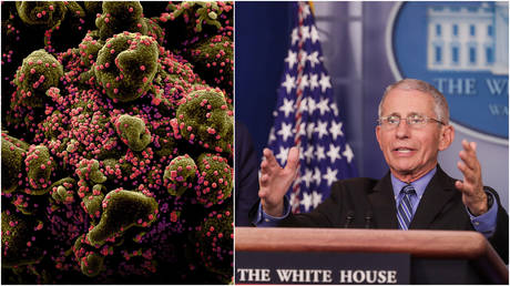 (L) Colorized scanning electron micrograph shows a cell heavily infected with coronavirus particles (pink); (R) Dr. Anthony Fauci addresses the coronavirus task force daily briefing at the White House in Washington, DC.