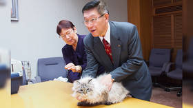 Not kitten around: Cat that Putin gifted to Japanese governor placed in isolation over coronavirus