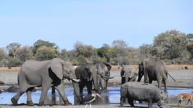 Not poisoned, not poached: Mystery surrounds death of 154 elephants in Botswana