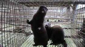 Denmark to kill 11,000 mink to contain farm coronavirus outbreak