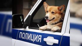 A Dog's Life: Russia's only Corgi Cop calls it quits