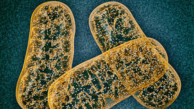 Breakthrough in debilitating disease fight as scientists create revolutionary mitochondrial DNA editing tool