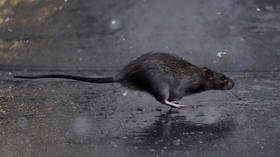 The ratpocalypse? Keiser Report explores pandemic's severe impact on NYC and… its RATS